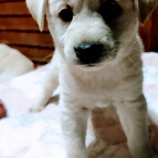 2ヶ月の子犬
