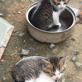 生後2か月ほどの仔猫4ひき
