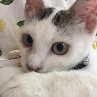 【一旦募集停止】半年〜1歳の子猫(オス)