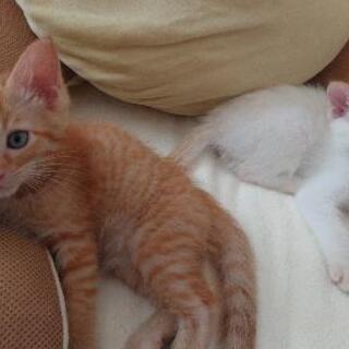 里親きまりました★子猫 ★2匹 飼ってくださる方探しています