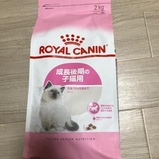 ロイヤルカナン成長後期の子猫用餌