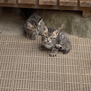 (里親様決まりました。)子猫の里親さんを募集します。