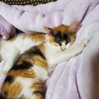 子猫 生後2か月ぐらい