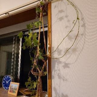 植物(植物と受け皿)譲ります