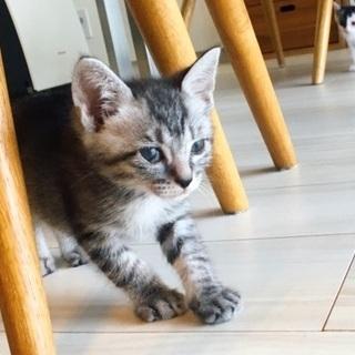 片目のキジのオス猫ちゃん