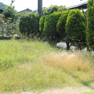 岡山市倉敷市全域で草刈り代行いたします。