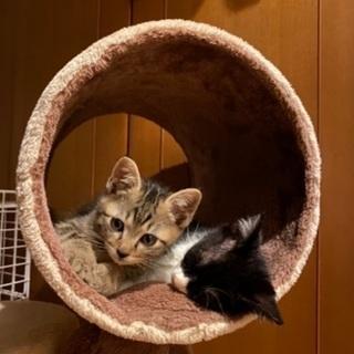 保護猫預かりボランティア募集⭐︎泉大津・岸和田・高石・和泉