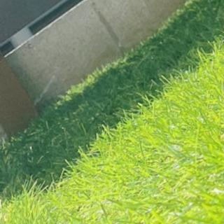 人工芝    DIY/お庭作りに!