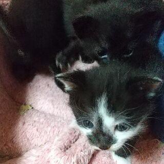 5月25日生まれ😸四ひきの子猫