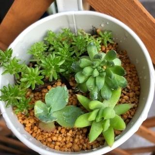 多肉植物 4種寄せ植え