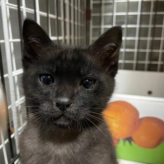 黒猫とハチワレ 2匹一緒に飼っていただける里親様募集