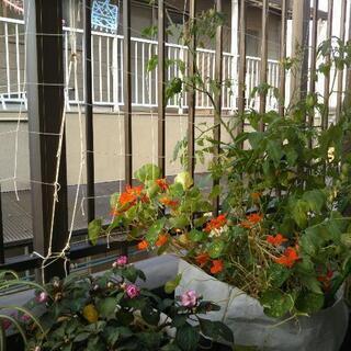 お花、果樹苗、観葉植物、野菜寄せ植え差し上げます☆