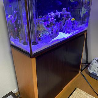 【ネット決済】水槽セット!オーバーフロー!海水生体付き