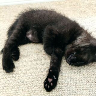 黒猫ちゃん 2匹