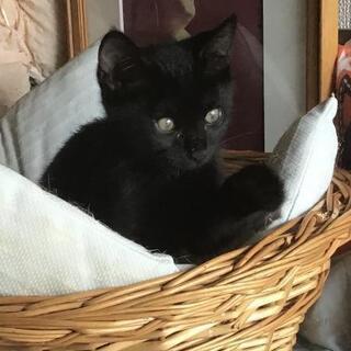 2ヶ月珍しいメスの黒猫ちゃん仲間の猫ちゃん達が大好き