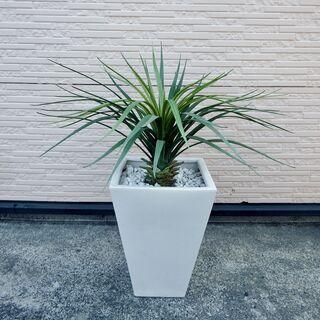 ドラセナ 観葉植物 人工 陶器鉢 インテリア