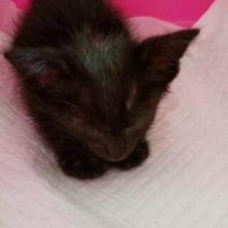 黒猫ちゃんを保護しました。助けてください。