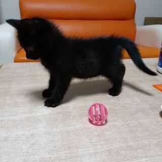 2か月の子ネコの里親を探しています