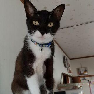 スリスリのシニア猫♪ 穏やかに暮らしたいにゃ。