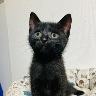 可愛い黒猫モモちゃん