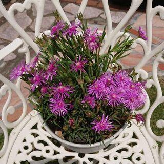 ②夏の花壇に(^-^)/松葉菊のプランター植えです(^-^)/