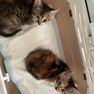 子猫2匹の里親募集します