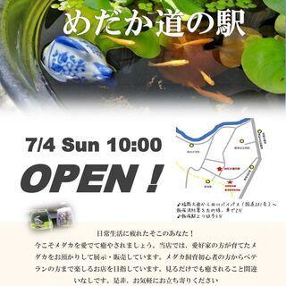 めだか専門店【めだか道の駅】オープンします!!