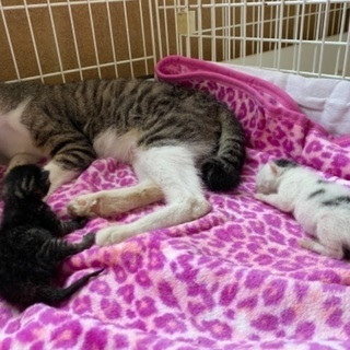 甘えた母猫と赤ちゃん2匹保護!