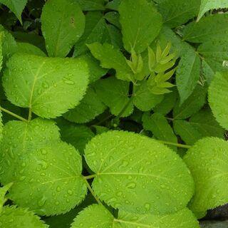 ◆画像の植物について教えてくださいの画像