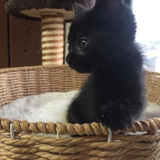 黒猫1ヶ月半から2ヶ月