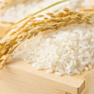 お米🌾購入させてください