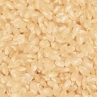 令和2年度産 多古米30kg 玄米