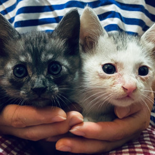 生後1ヶ月ほどの仔猫、離乳済み