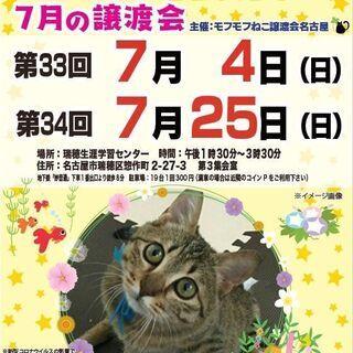 7/4(日) 猫の譲渡会 in 名古屋市瑞穂生涯学習センター