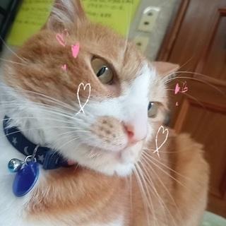 里親募集 成猫 ポンタ(オス) 3歳?