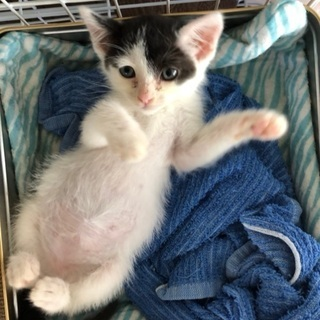 車のボンネットに迷い込んだ子猫!