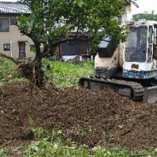 植木、樹木の植え替え/お引っ越しいたします❗️