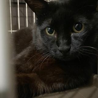 無人島で保護した黒猫さん