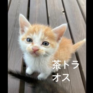 生後1ヶ月 子猫 里親さん募集