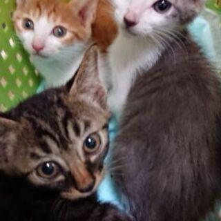 わんぱく甘えん坊の3兄弟子猫