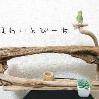 流木止まり木・バードタワーNo.⑩