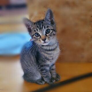 生後3ヶ月 子猫