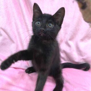 2~3ヶ月黒猫女の子🎀の家族募集✨