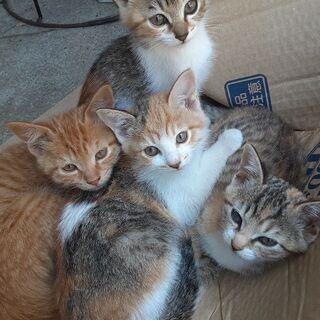 生後2ヶ月半~三毛猫三姉妹と雄の茶トラです!!