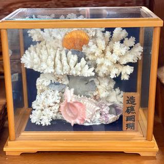 造礁サンゴの置物