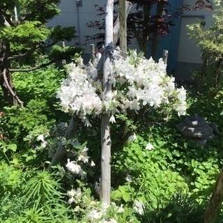 樹木、苗木、庭土    差し上げます!