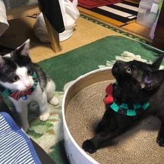 黒猫とハチワレ猫兄弟