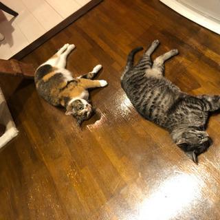 生後5年の猫2匹