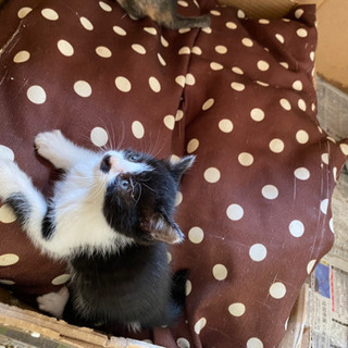 子猫6匹♡里親募集中