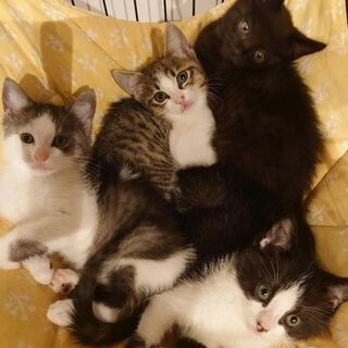 4匹の可愛い子達